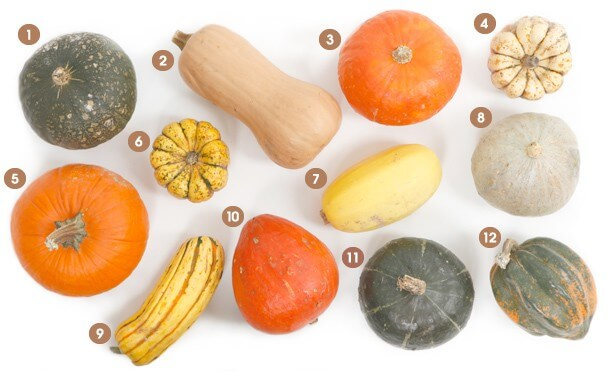Visual-guide-winter-squash