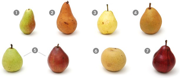 Visual guide to pears